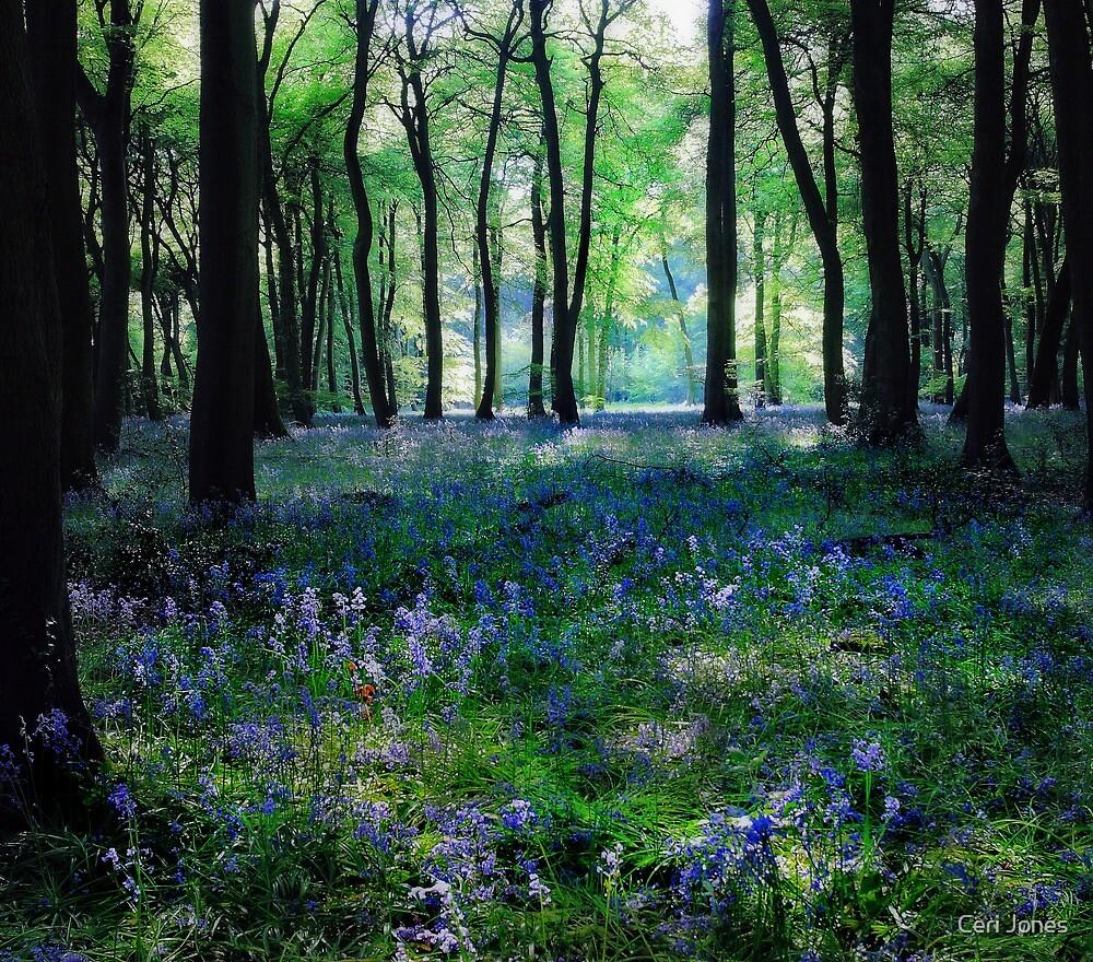Spring Bluebells by Ceri Jones