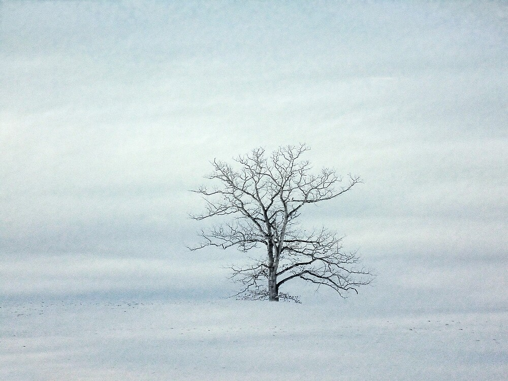 Old Winter Tree by PineSinger