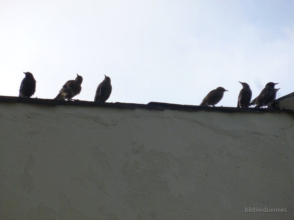 starlings on the roof by bibblesbunnies