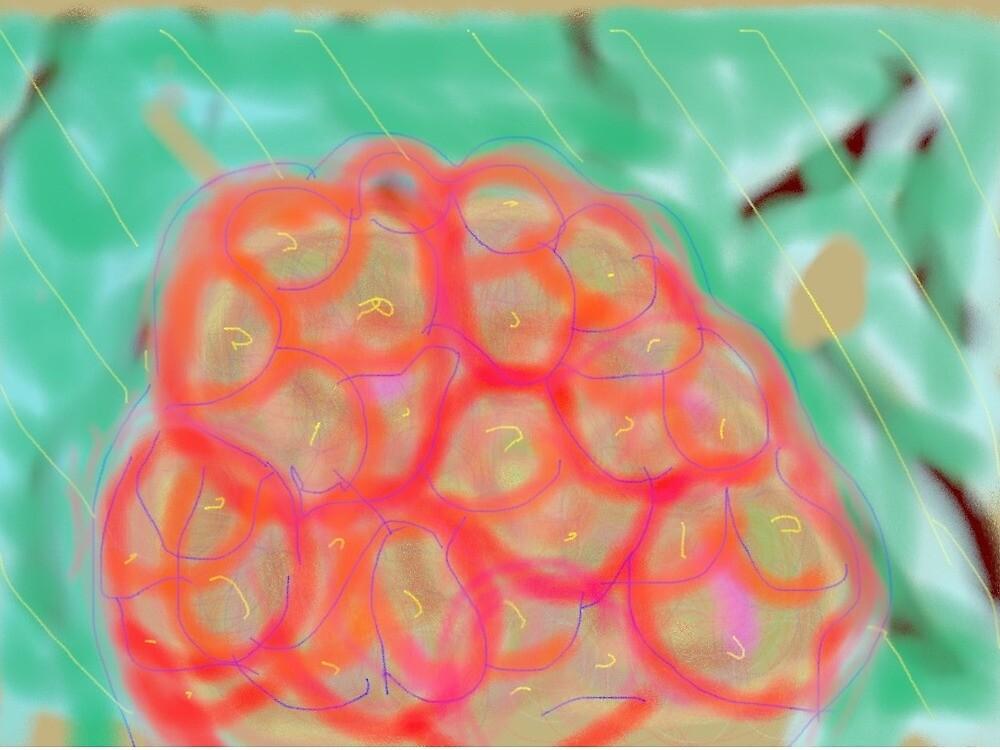 Hydrangea by Hughp