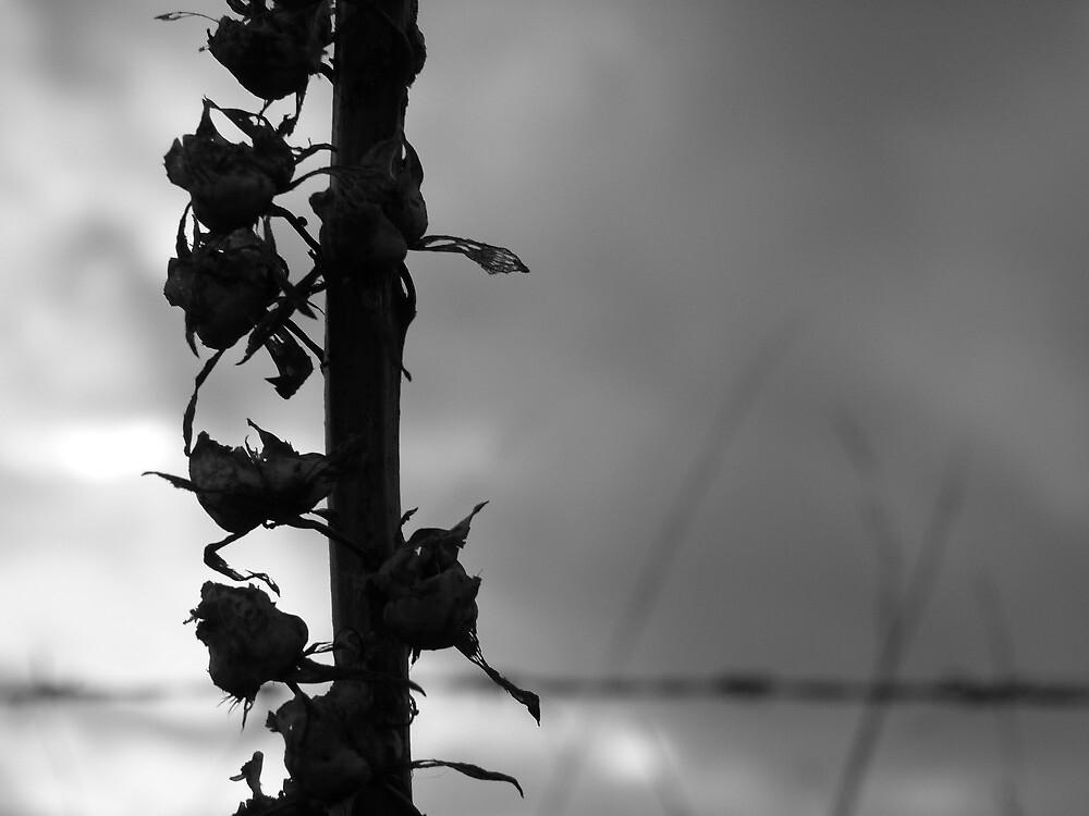 Foxglove in Autumn by Ruby-Grace