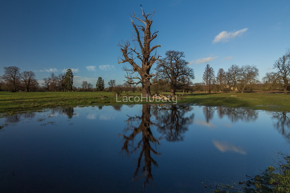 Reflection of tree by LacoHubaty