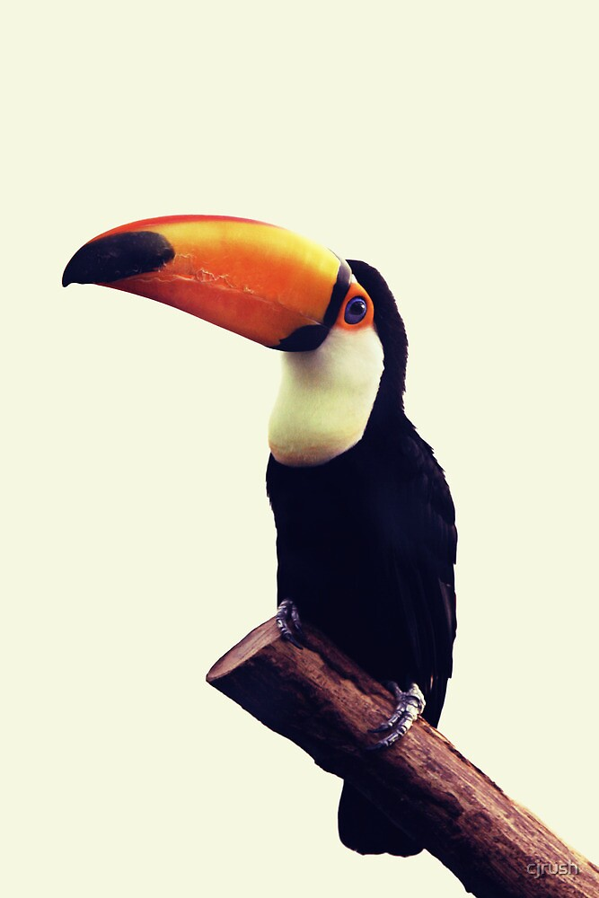Toucan glance by cjrush