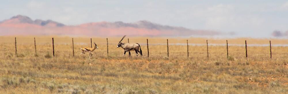 Gemsbok and Springbok by Petra Holland