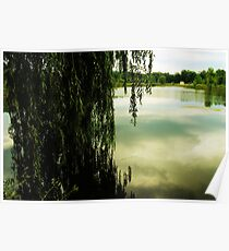 Willow reflections  Poster