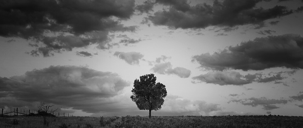 Lonely by Shawn Giles