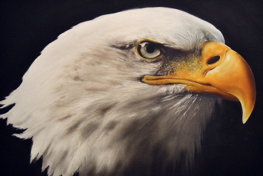 Eagle by juccu