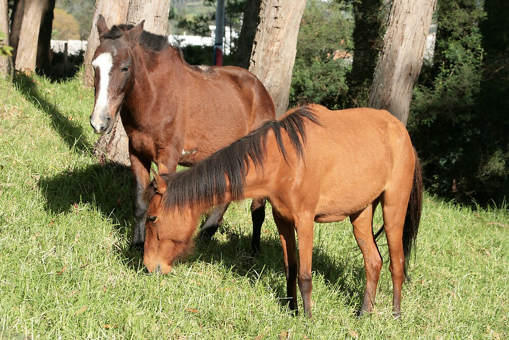 Horses in a Pasture by rhamm