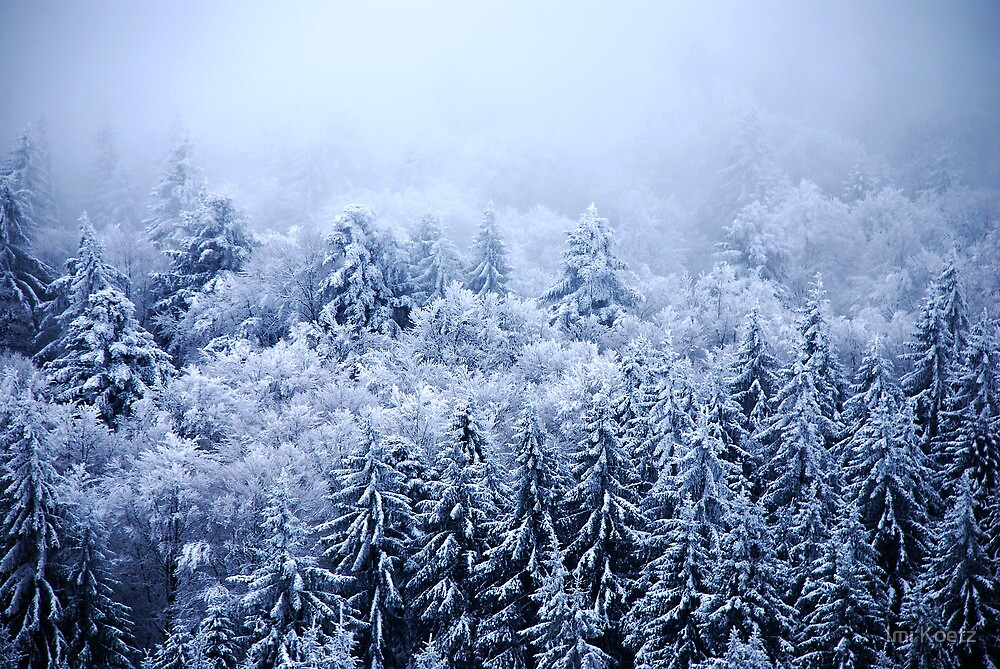 Foggy and snowy Black Forest by Imi Koetz