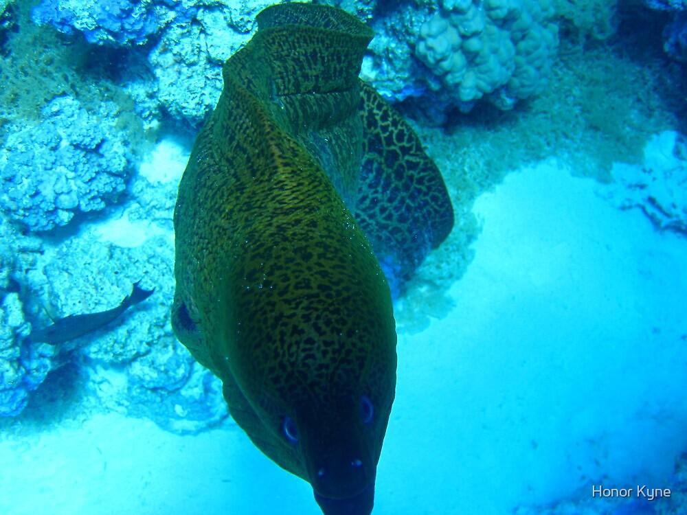 Mooray Eel - Bora Bora by Honor Kyne