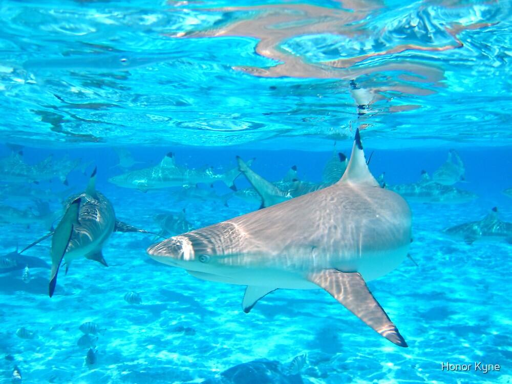 Black Tip Reef Sharks - Bora Bora by Honor Kyne