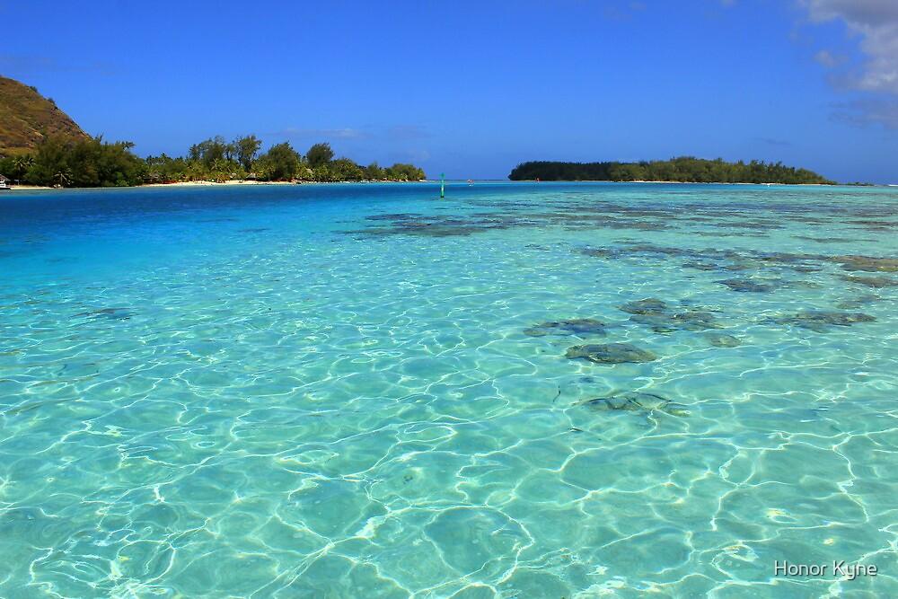 Moorea Island Coral Reef by Honor Kyne