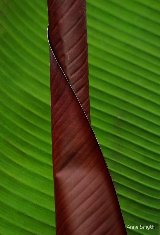 Texture 1 by Anne Smyth