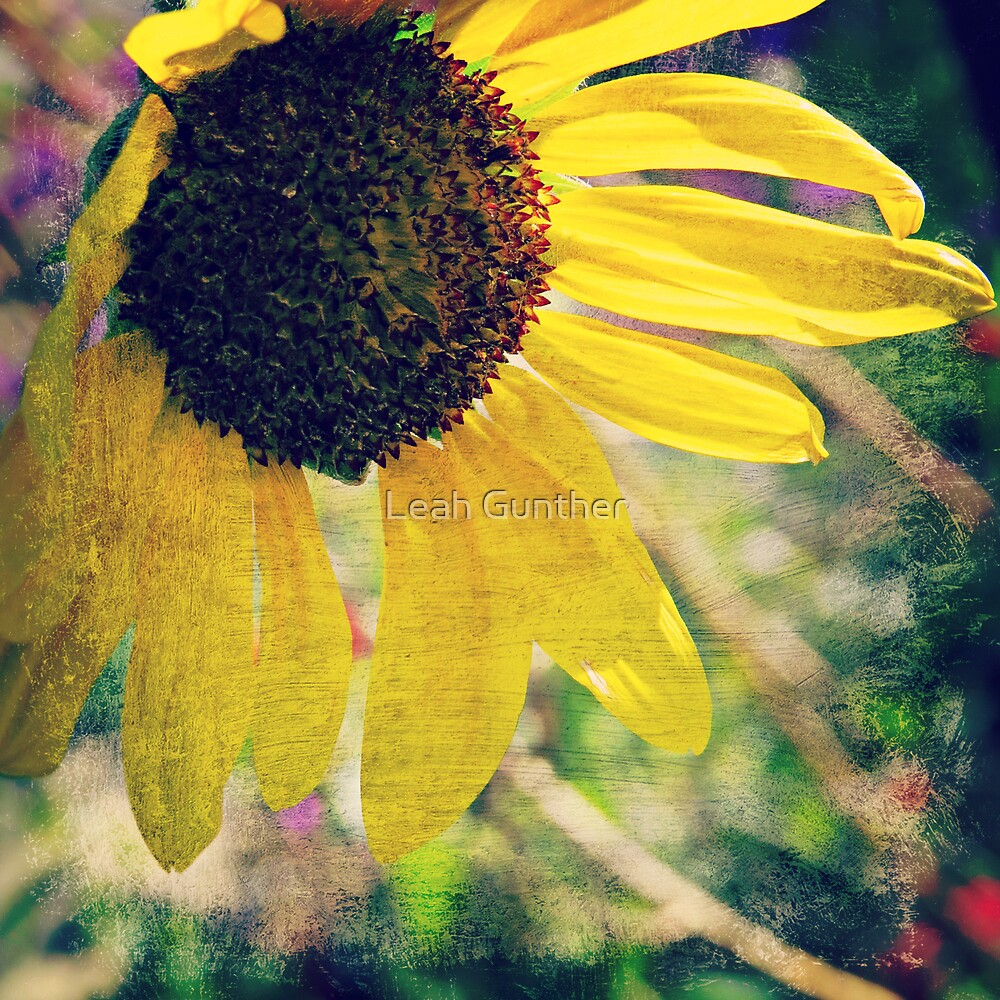 Sunflower 2 by Leah Gunther