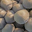 Fairy Inkcaps by MikeSquires