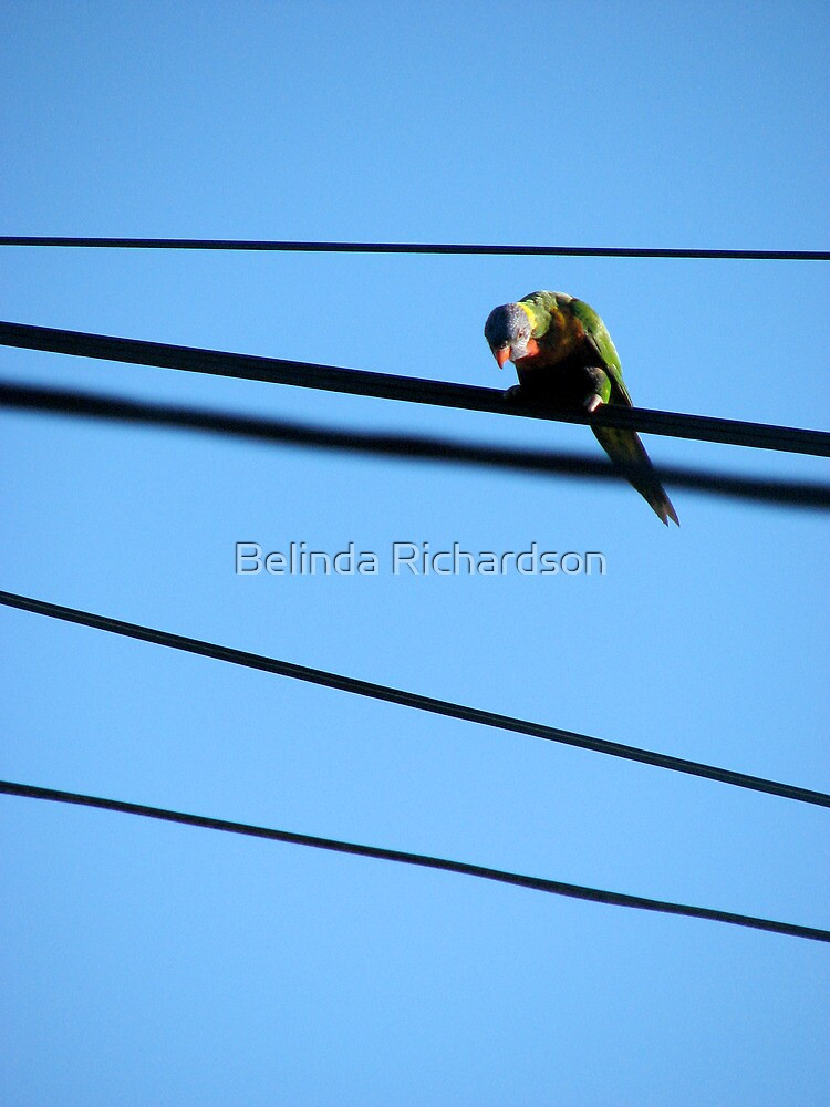 Highwire by Belinda Richardson