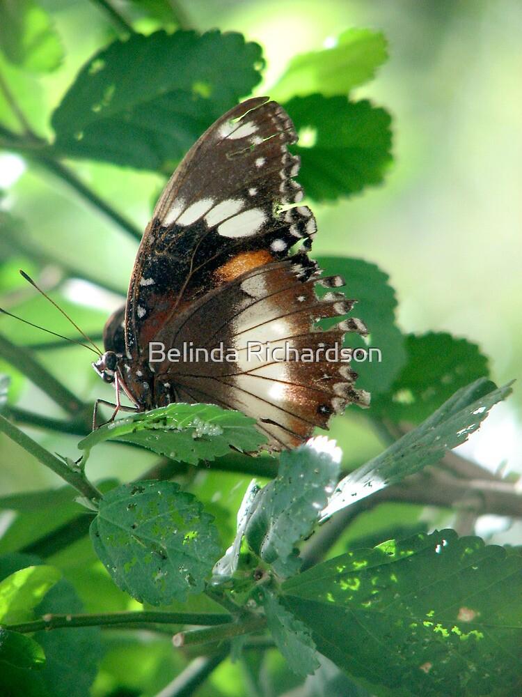 Delicate by Belinda Richardson