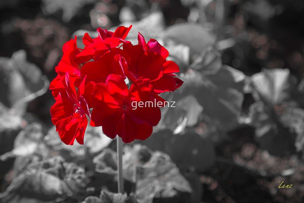 Red Flower by gemlenz