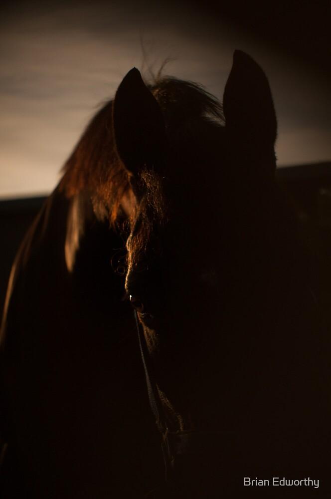 Dawn of the horse by Brian Edworthy