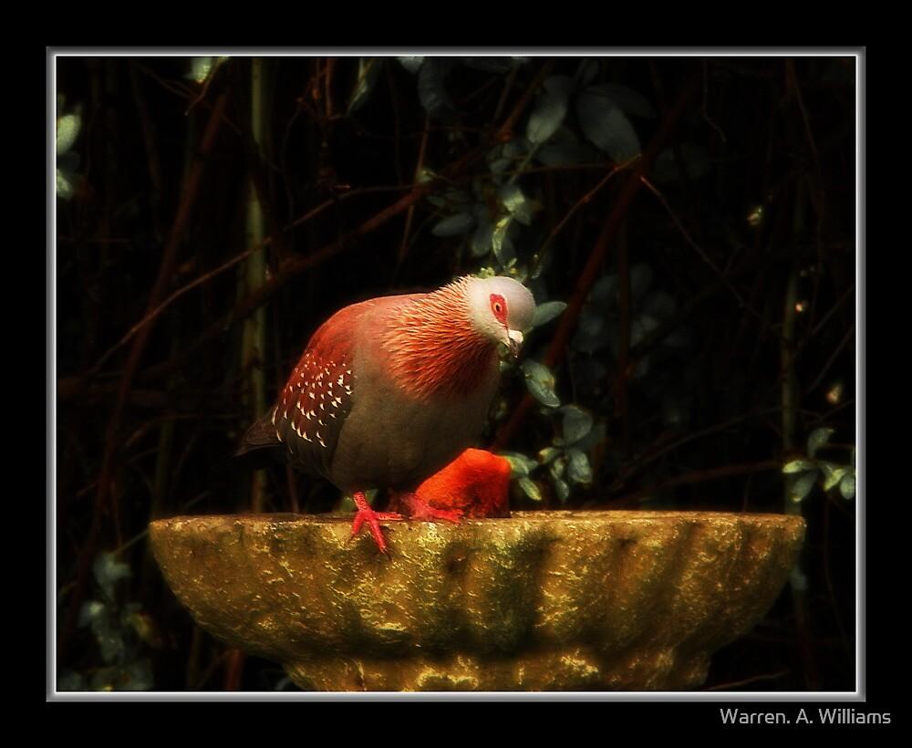 At The Bird Bath by Warren. A. Williams