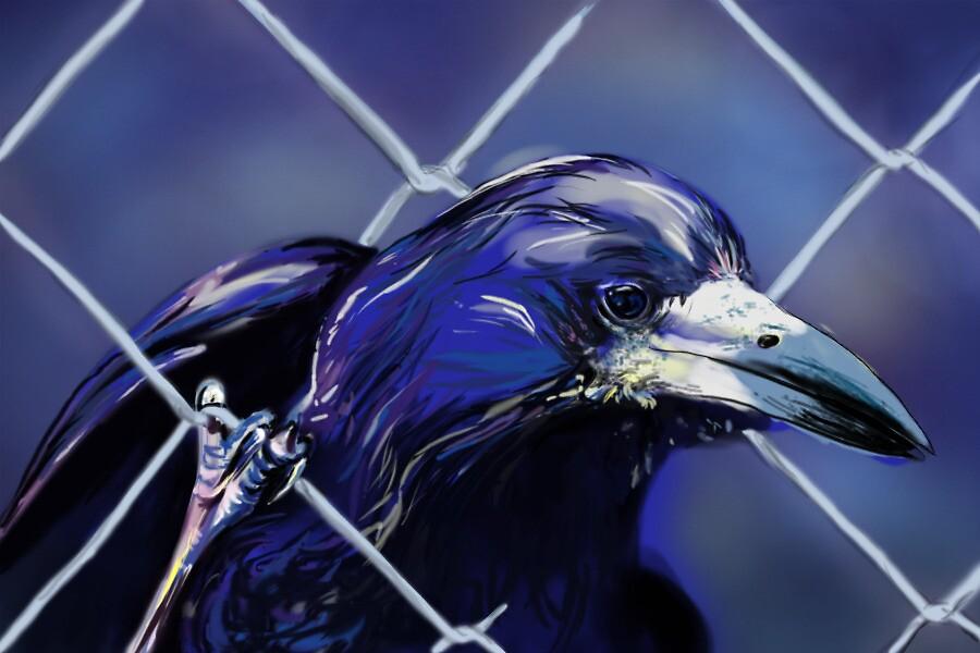 Raven by Janice Cheng