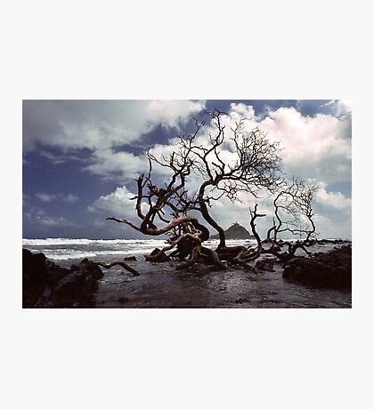 Hana Coast Photographic Print