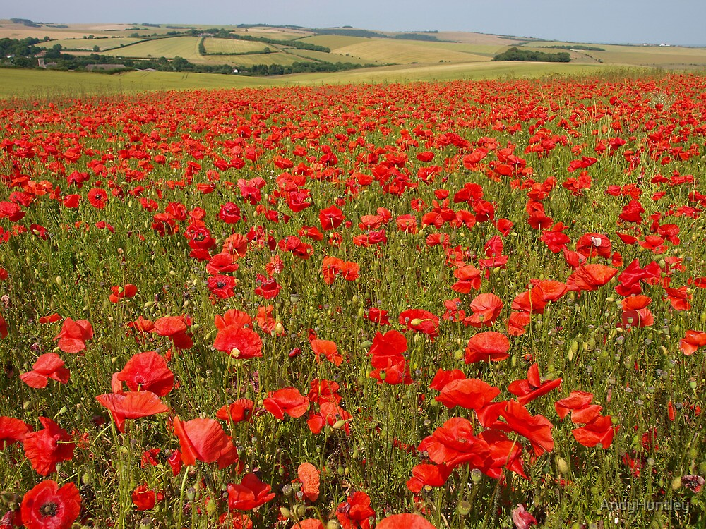 Poppy Field by AndyHuntley