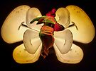 "Light butterfly 2 by Antonello Incagnone ""incant"""