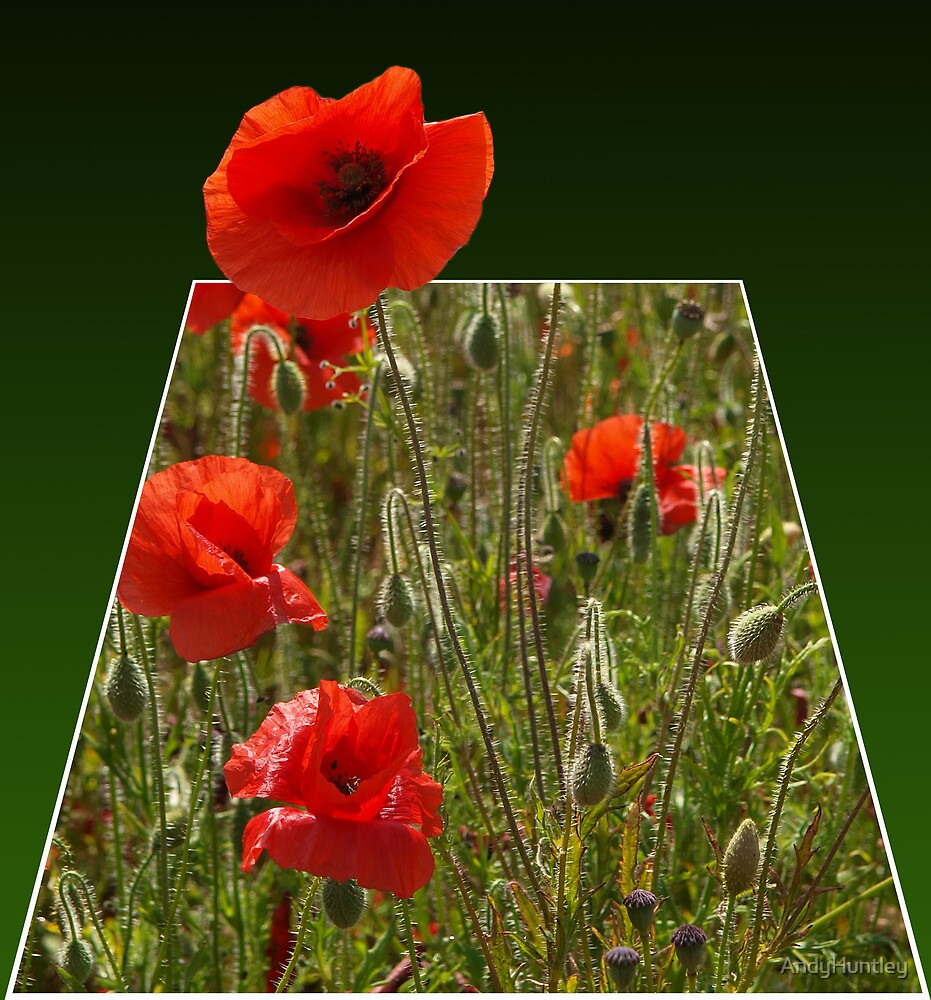Pop Up Poppy by AndyHuntley