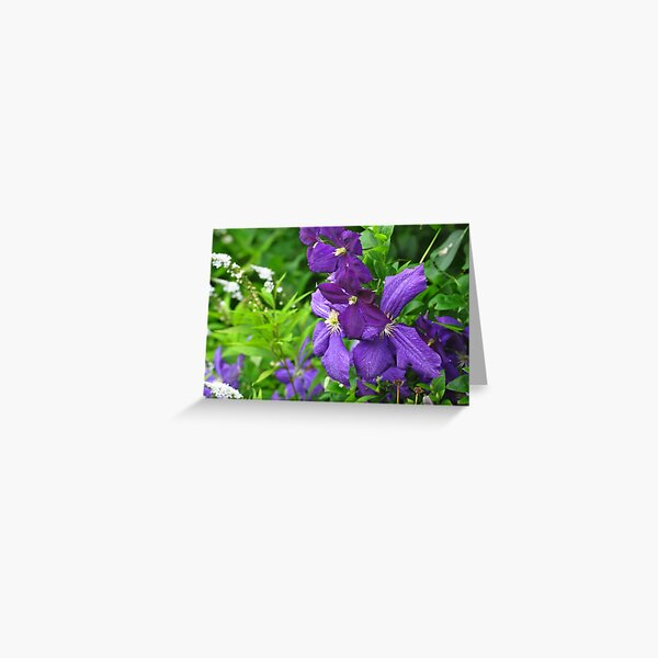 Clematis vines among wildflowers  Greeting Card