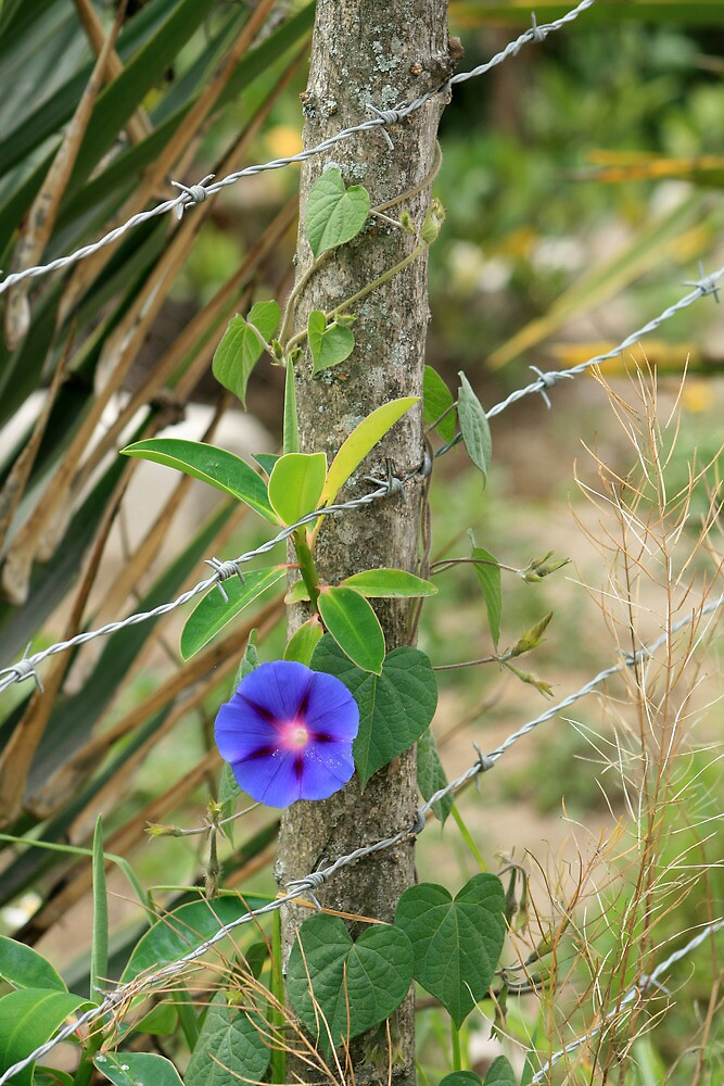 Purple Flower on a Fence Post by rhamm