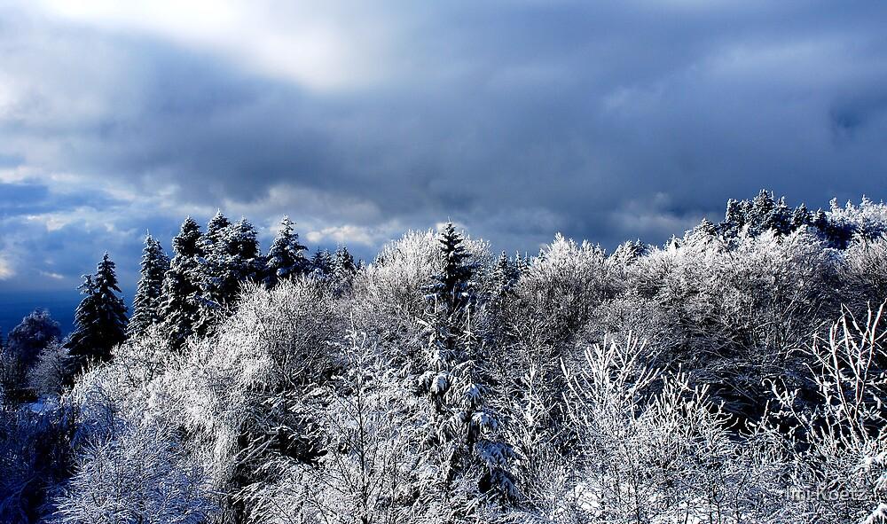 Snowy Black Forest by Imi Koetz