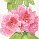 Pink Delight - Rhododendron by Diane Hall