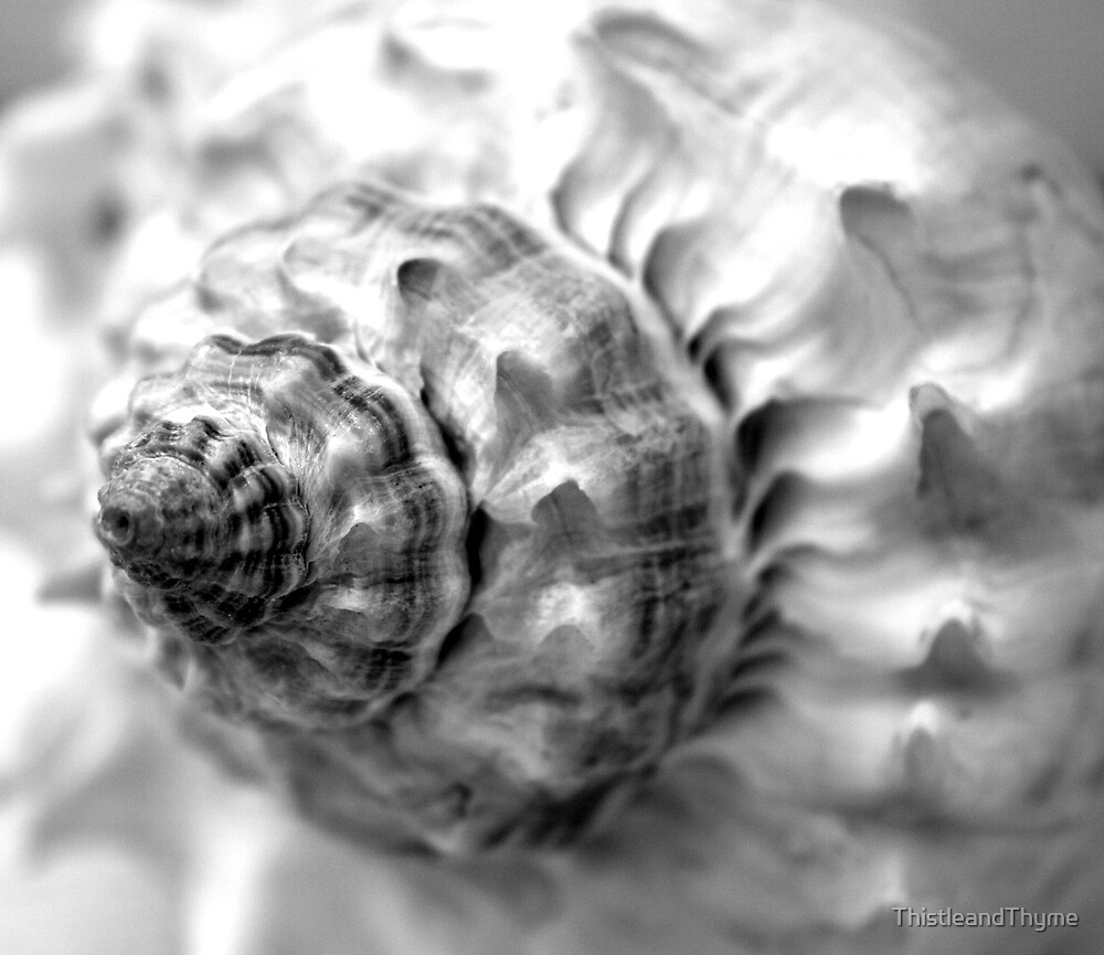 Black and White Shell by ThistleandThyme