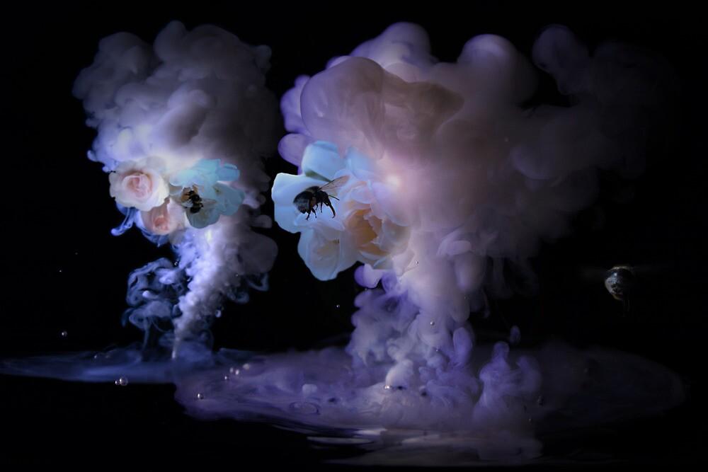 Perfume by Steve Björklund