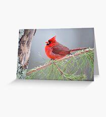 Cardinal in January Greeting Card