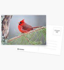 Cardinal in January Postcards