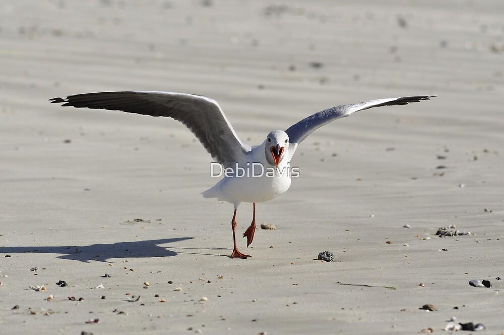 Grey-headed Gull by DebiDavis