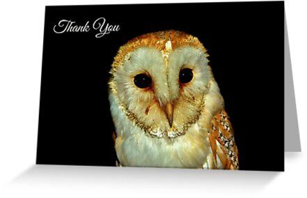 Barn Owl Thank You Card by Paula J James
