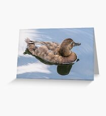 duck reflection Greeting Card