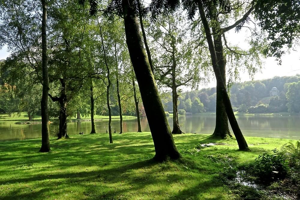 Through the trees. by John Thurgood