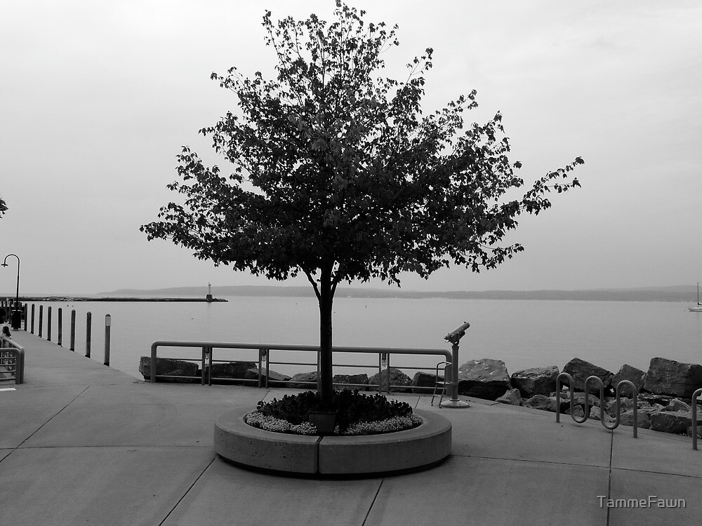 Tree- Black and White by TammeFawn