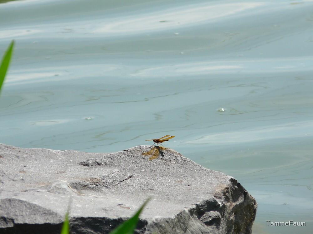 Dragonfly by TammeFawn