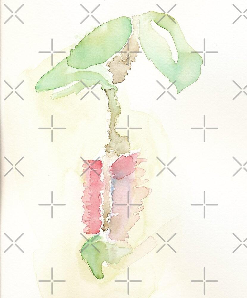 Bottlebrush Flower by Illusorie