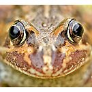 Frog Face by Yanni