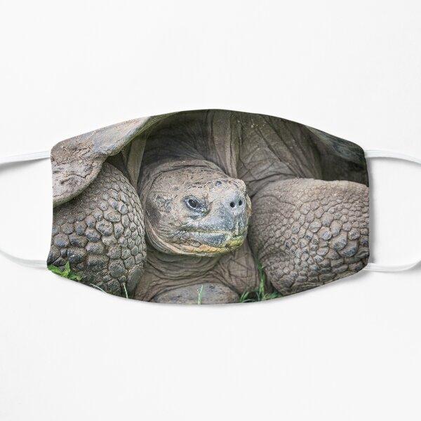 Ponderous Tortoise Flat Mask
