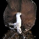 Agaricus Life by Carla Wick/Jandelle Petters