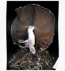 Agaricus Life Poster