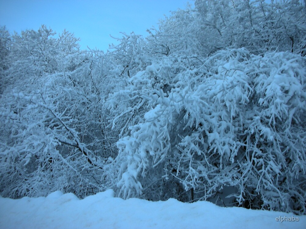 Snowy trees by elphaba