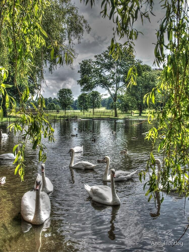 Swan Lake by AndyHuntley